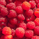 Fruits rouges : framboise